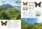 念願の北海道の高山蝶採集