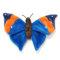コノハチョウは沖縄県指定の天然記念物です