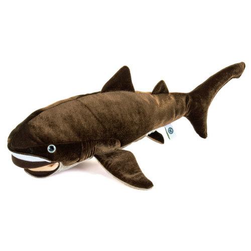 世界中で捕獲例の少ない、非常に珍しい大型のサメ、メガマウスザメ